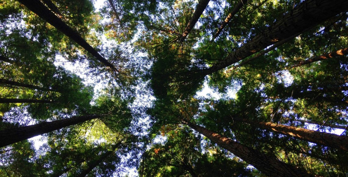 Low angle photo of tree tops